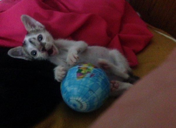 Ce chaton abandonné miaule sans arrêt, appelant sa mère, jusqu'à ce qu'une femme vienne le secourir…