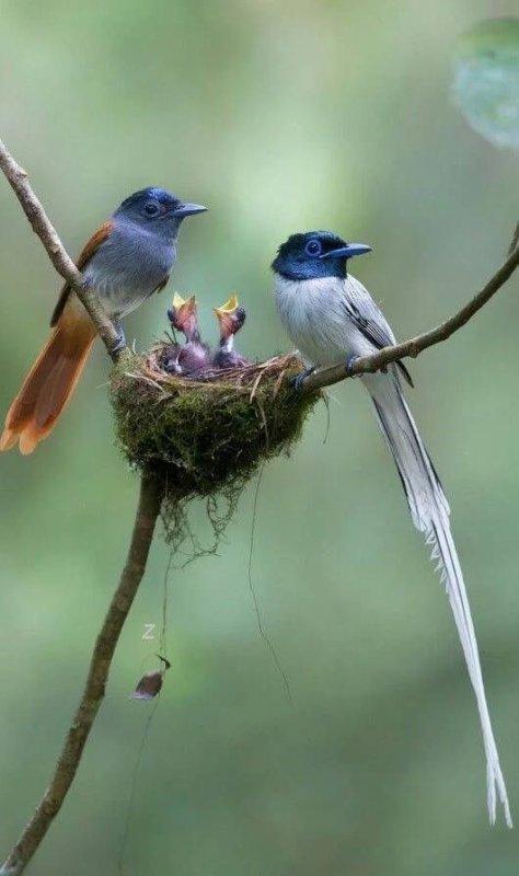 Préservons Dame Nature et ses habitants volants!