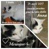 Petit Hommage à Meringue qui est partie le 24 mars 2017, merci ....pensées à Grisounette partie le même jour....