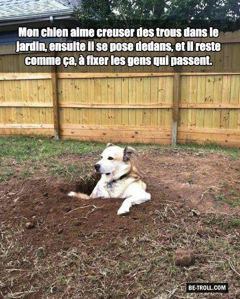 Petite touche d'humour canine......