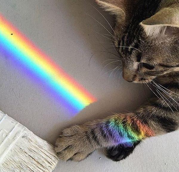Attitudes Cats Love