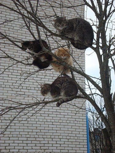 Pour les Amoureux des Chats, Cadeaux à prendre si vous voulez .....
