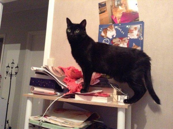 Merlin, mon Bébichou, me regarde avec plein d'amour