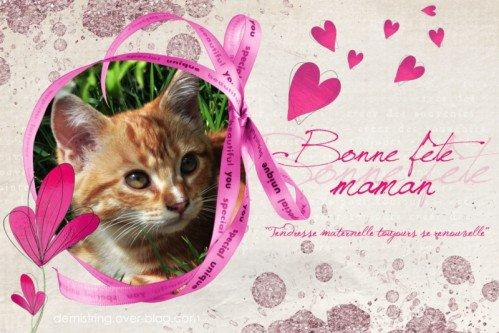 Je tiens à souhaiter une bonne fête à toutes les mamans, des enfants, chats , chiens etc etc....c'est cadeau !