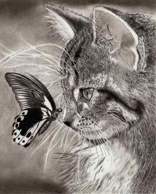 Chats et Papillons