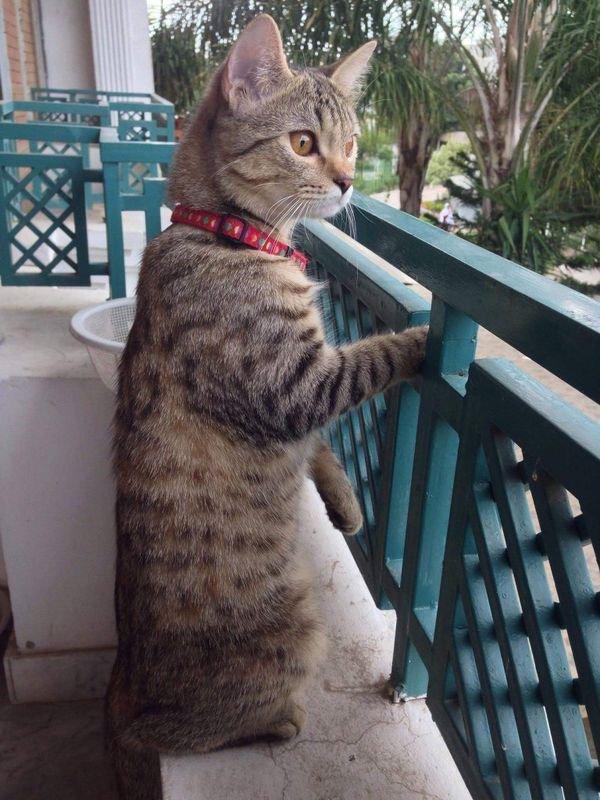 Attitudes nobles cats trop adorables.....