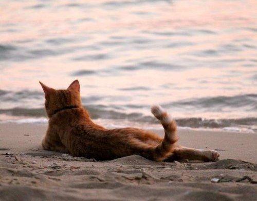 Attitudes Cats souvent hilarantes ....
