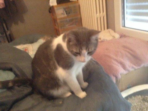 Mes chats-moureux.....Hubert, Mooky, Caramel, Hubert, Mooky, Marilou, Marilou et Hubert
