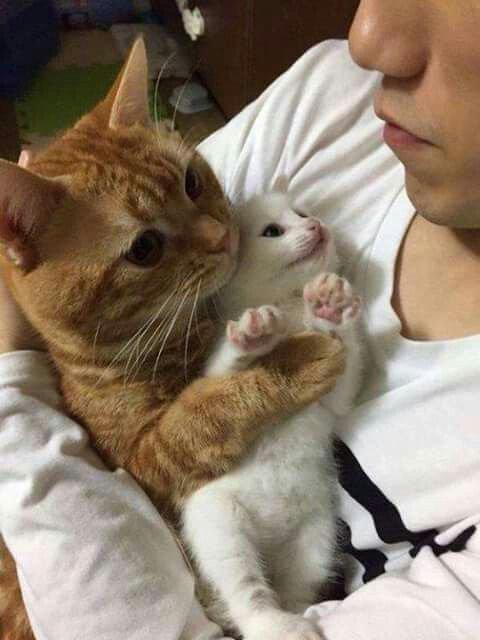 Mamans et Bébés