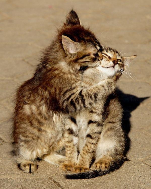 Attitudes Cats .....