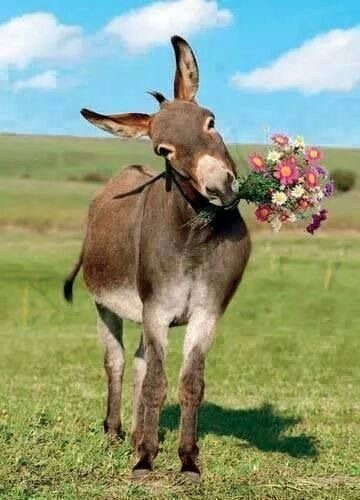 J'adore ce petit âne qui m'offre des fleurs, c'est cool et cela tombe bien, car je préfère que l'on m'appelle Anne...merci l'âne....heu ma fille pour cette photo.....