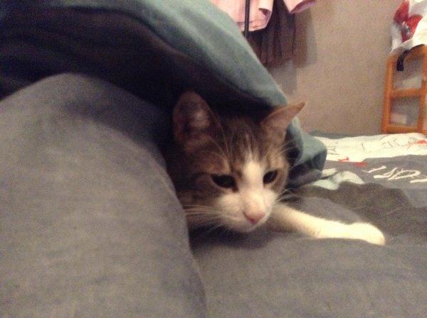 Faire son lit est parfois difficile. Hein Hubert et Marilou ?