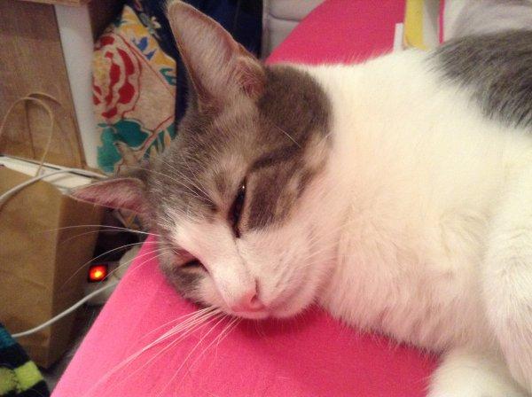 Hubert, petit chat doux, petit chat tendre, un amour de chat si pacifique, quel plaisir que de t'avoir pour compagnon, je t'adore....