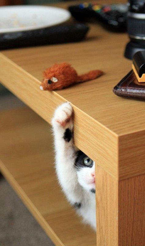 Attitudes Cats