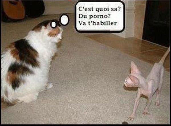 Attitudes Cats ....avec un peu d'humour.....