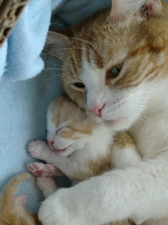 Mamans et Bébés Chats