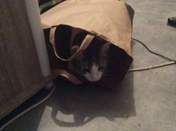 Hubert pris la main dans le sac....hi hi hi.....