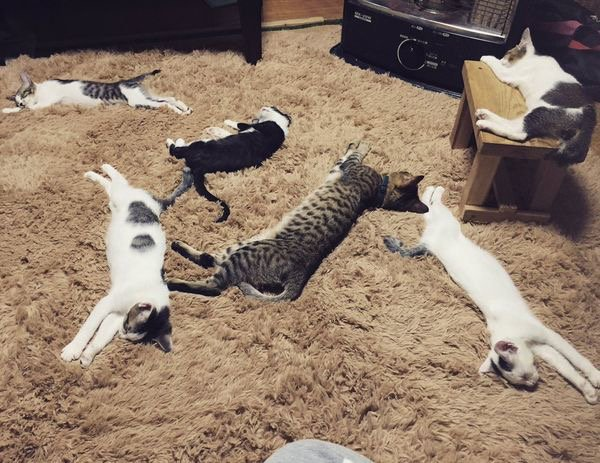 Attitudes Cats...ils sont trop malheureux ? Hi Hi....