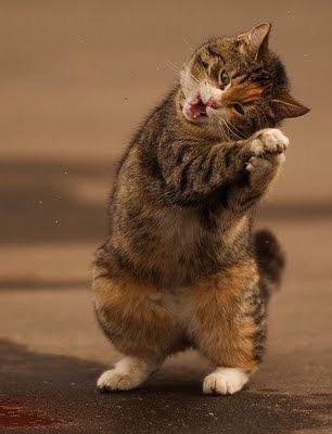 Attitudes Cats...j'adore ces séries de clichés que je trouve sur Pinterest