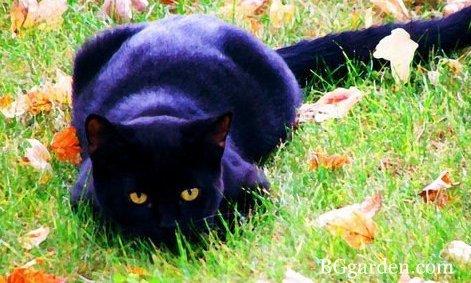 Attitudes Cats.....je ne m'en lasse pas .