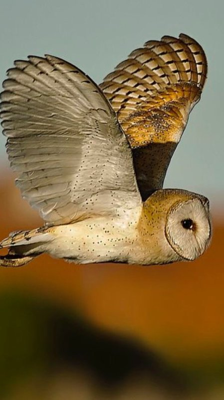 Beauté de la Vie Animale à préserver...