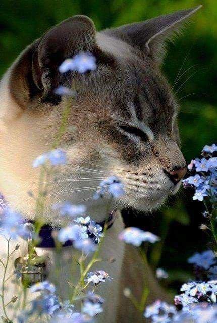 Attitudes Cats et de bien jolis regards...