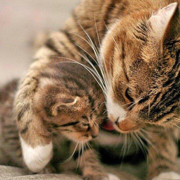 Mamans et bébés....trop chou