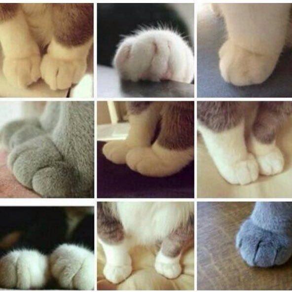 Petits Bouts de Chats....
