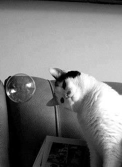 Attitudes Cats...certains sont drôles , d'autres sont incroyables.....mais TOUS Choux.