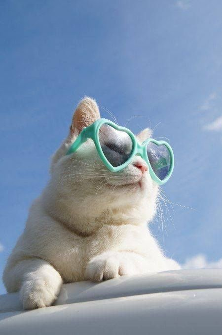 Attitudes Cats...certaines sont retouchées mais pas grave , c'est amusant....