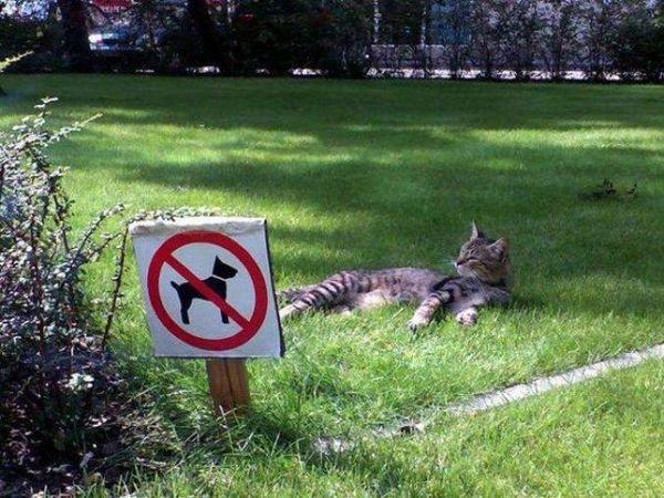 Attitudes Cats....la dernière c'est Popcorn qui a pris une attitude aussi, trop chou.