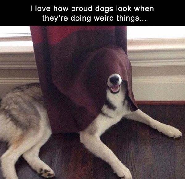 Pour changer un peu, attitudes dogs.....