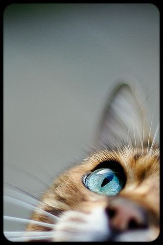 Petits Bouts de Chats......