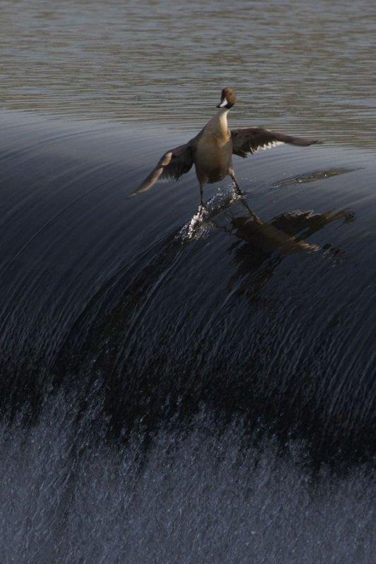 Photos saisissantes prises en pleine action de nos oiseaux....