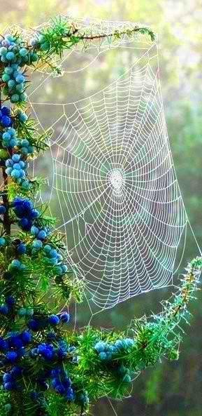 Quand mère nature nous émerveille.....