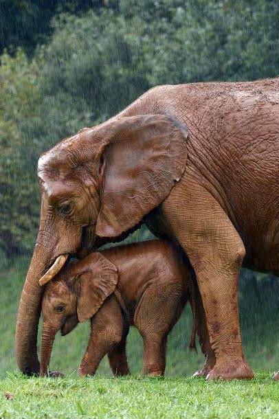 Vraie Beauté Animale....et sans fioritures.