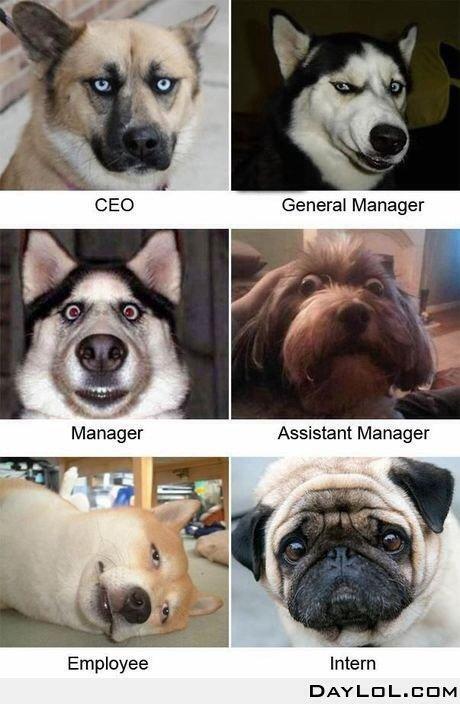 Attitudes Dogs...certaines sont hilarantes....j'adore et vous?