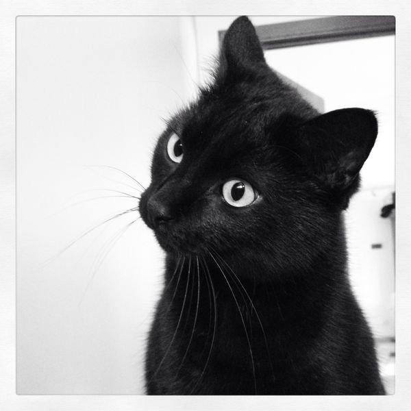 Tous très beaux ces félins noirs, couleur que j'adore....