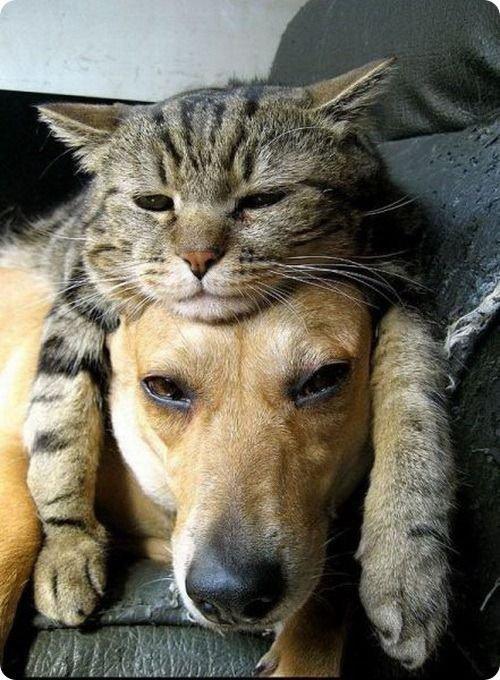 Nous sommes tous copains.....trop choux.