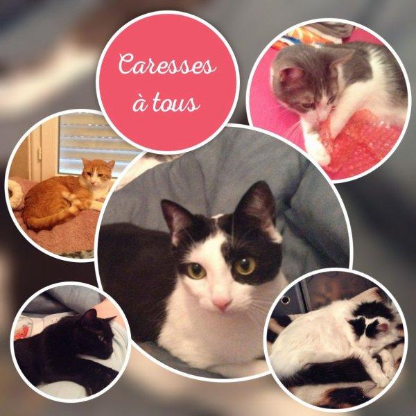 Magnifiques créations reçues pour la Fête des Chats....Merciiiiiiiiiiiiiii
