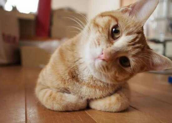 Attitudes Cats...