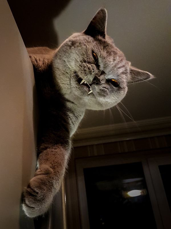 Attitudes Cats....