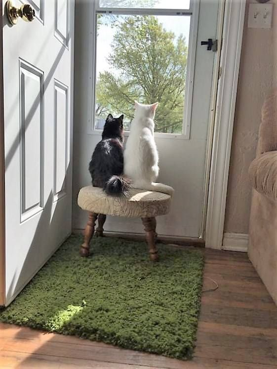 Attitudes Cats!