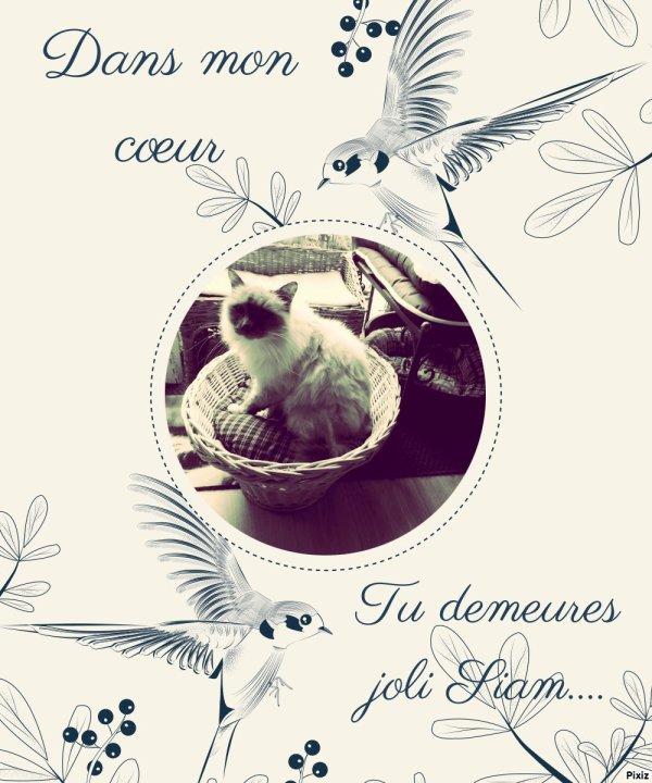 """Petit hommage pour Siam ...des """"loulous d'amour"""""""