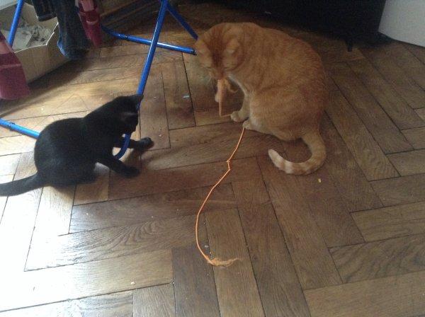 Popchou initie Nino au jeu de la ficelle inventé par lui , ils tiraient à la fin tous les deux mais photos trop floues .....
