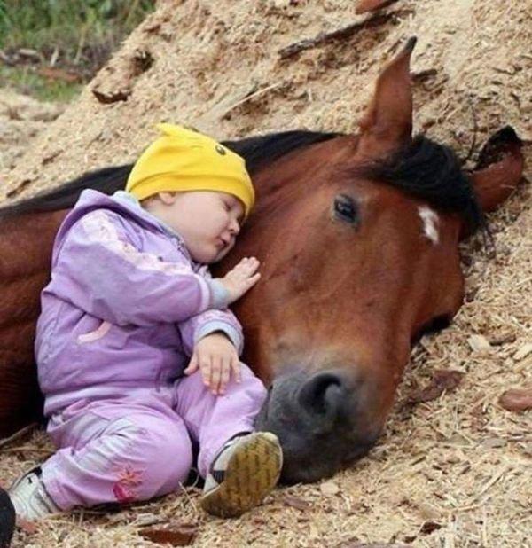 Amis pour la Vie....