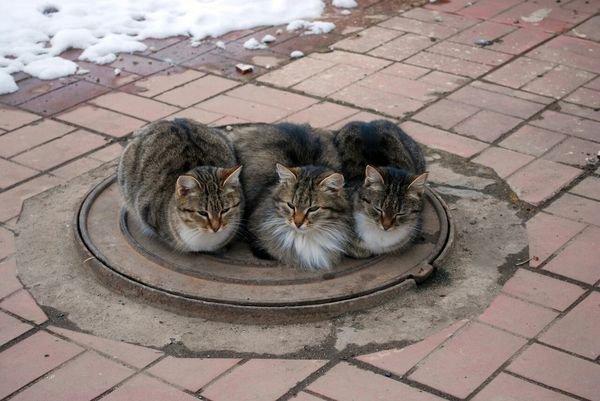 Attitudes Cats.....