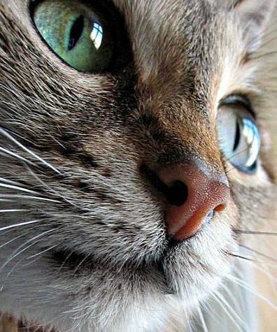 Petits Bouts de Chats...aux gueules d'ange.
