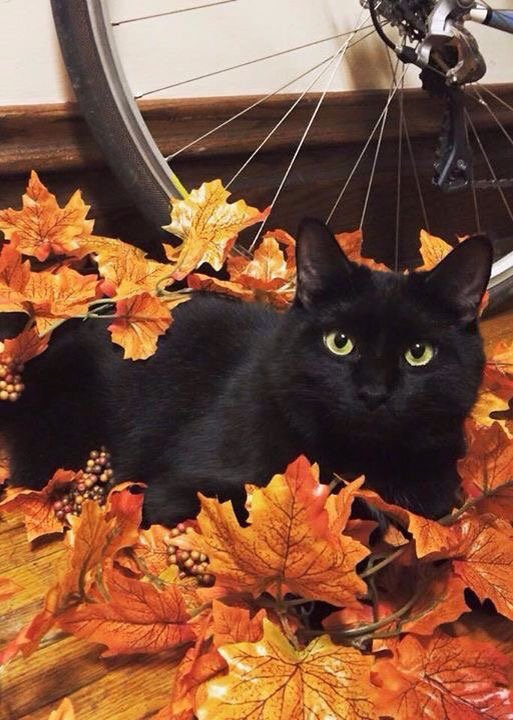 Chats Noirs dans tous leurs états.