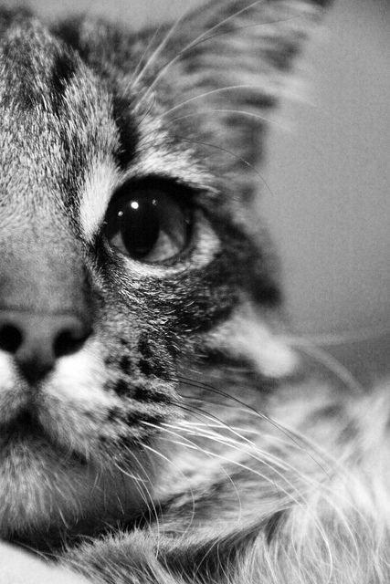 Petits Bouts de Chats...